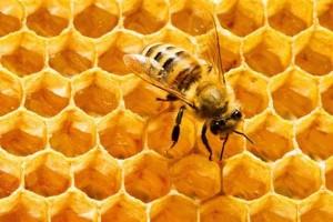 فواید بره موم زنبور عسل برای سلامتی