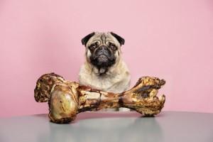حیوانات خانگی تغذیه حیوانات خانگی؛ بهترین تغذیه برای آنها چیست؟