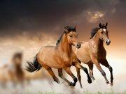 فیلم :زیباترین فیلمی که تا حالا از اسبهای وحشی دیده اید !