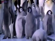 ویدئو :  زندگی پنگوئن ها بسیار خنده دار حتما ببینید