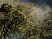 ویدئو : مستند بی نظیر با نام  HOME