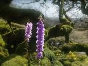 ویدئو :    مستند فوق العاده جذاب و تماشایی Life (زندگی)