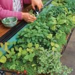 آموزش ساده سبزی کاری در آپارتمان