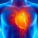 ۴۱ حقیقت جالب در مورد قلب انسان که نمیدانستید