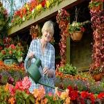 این گیاهان خانگی، هوای خانه شما را تصفیه میکنند!