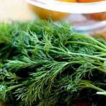 خواص سبزی شوید گیاهی معطر