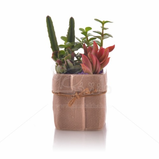 مجموعه ساکولنت در گلدان چینی طرح کنفی ارتفاع 15 سانت