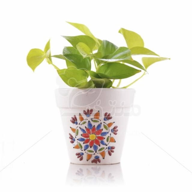 گیاه آپارتمانی پتوس طلایی در گلدان طرح میناکاری ارتفاع 23 سانت