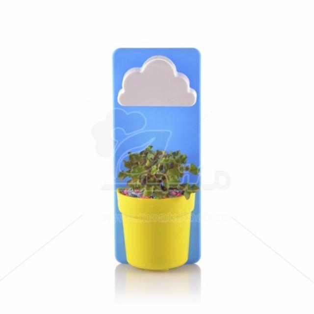 گیاه آپارتمانی آلترنانترا (رویال) در گلدان پلاستیکی طرح بارانی