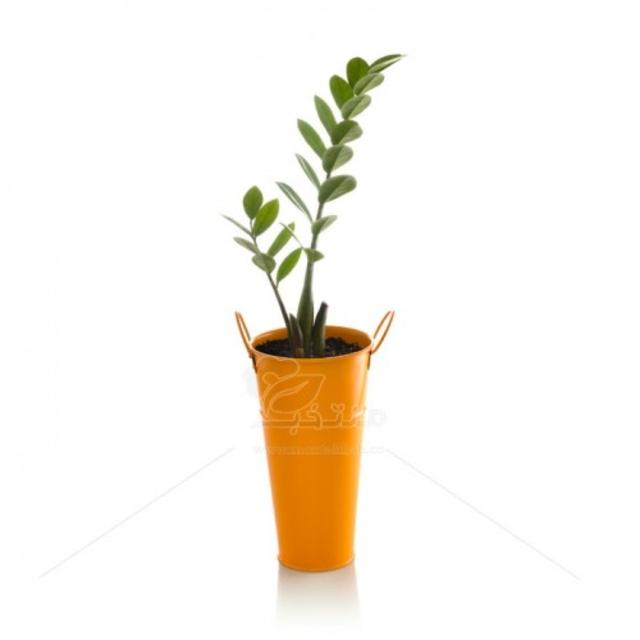 گیاه آپارتمانی زاموفیلیا در گلدان فلزی طرح تورینگ ارتفاع 50 سانتیمتر
