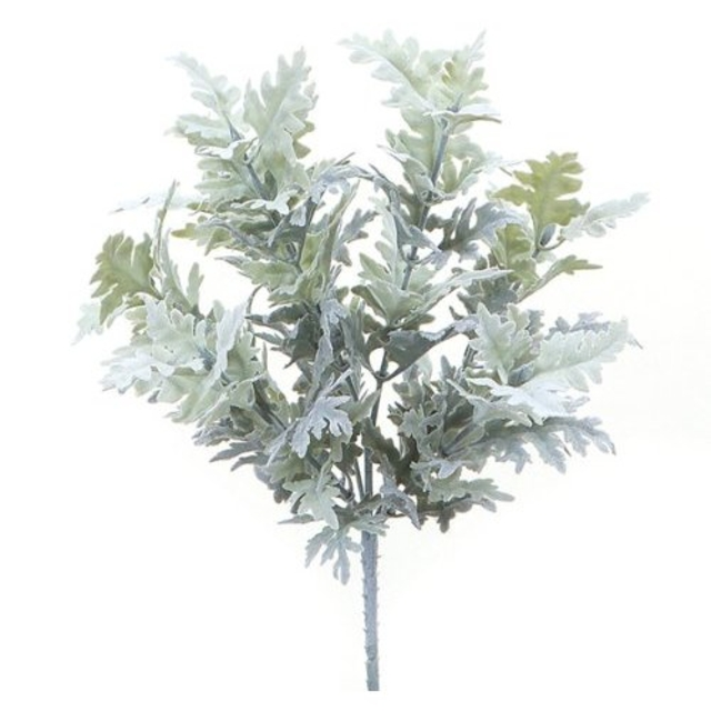 بذر گل ابری نقره ای