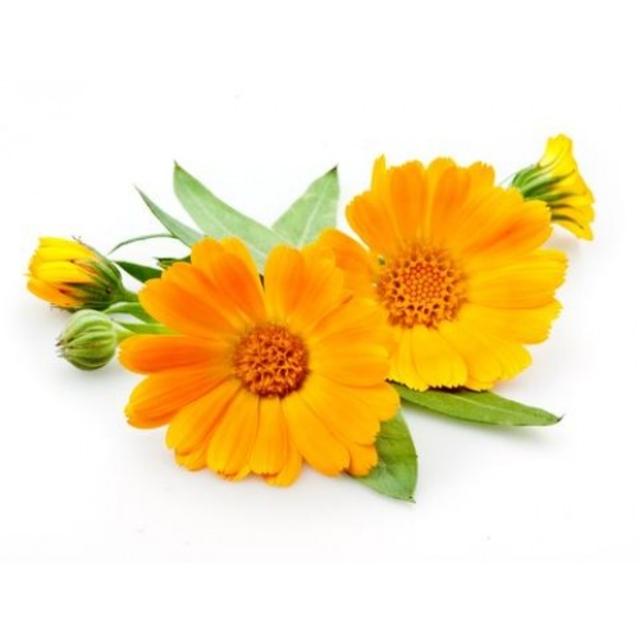 بذر گل همیشه بهار پاکوتاه نارنجی