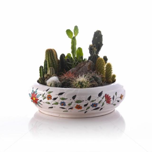 مجموعه کاکتوس در گلدان طرح بونسای میناکاری