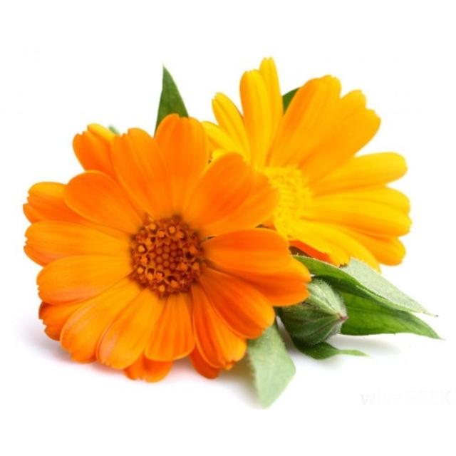 بذر گل همیشه بهار