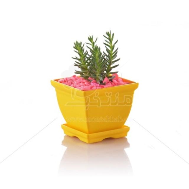ساکولنت سدوم Goldmoss در گلدان پلاستیکی شهرآذین مدل 7006