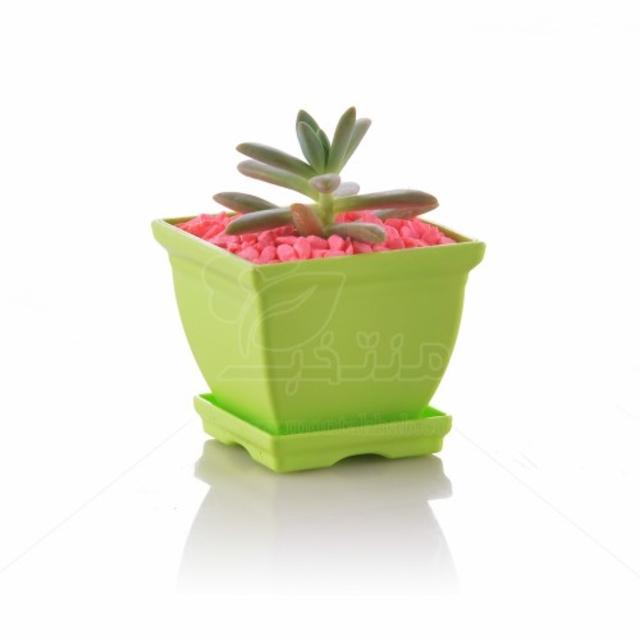 سدوم نوسبامریانوم در گلدان پلاستیکی شهرآذین مدل 7006