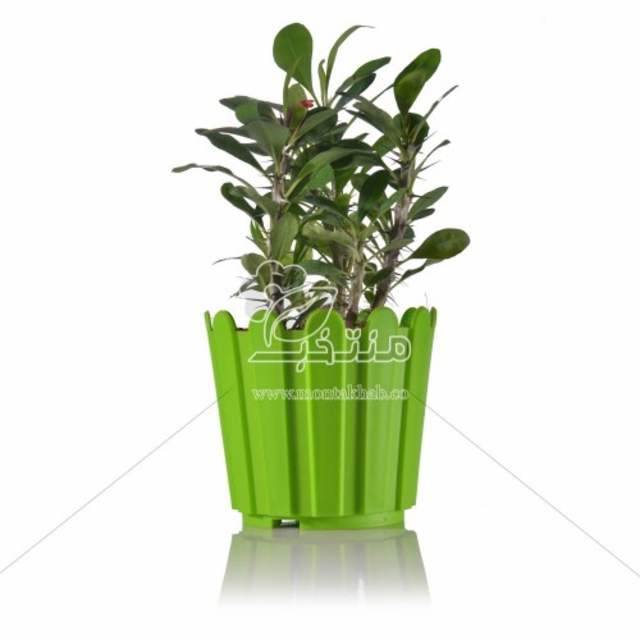 گیاه آپارتمانی مرجان در گلدان P14