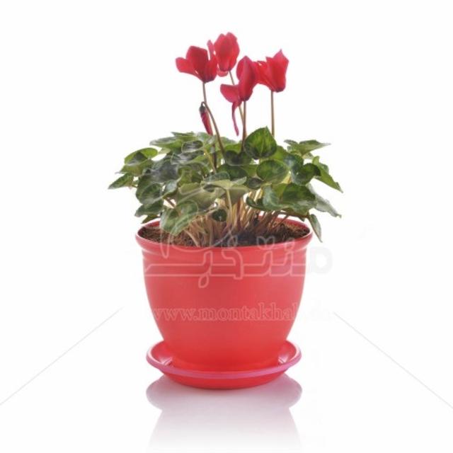 گیاه آپارتمانی سیکلامن در گلدان مدل 3020