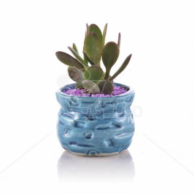 ساکولنت کراسولا اواتا در گلدان طرح سنگی 11 سانتیمتر