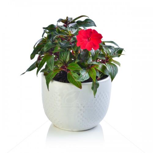 گل حنا در گلدان سرامیکی نقطه ای ارتفاع 22 سانتی متر