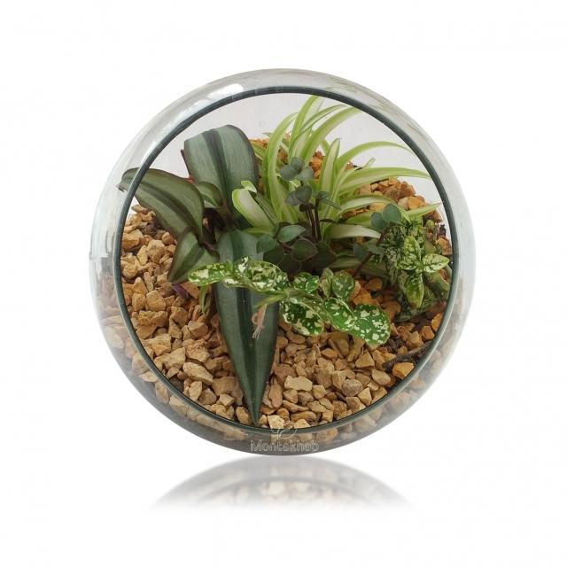 تراریوم گیاه در گلدان شیشه ای مورب ارتفاع 15 سانتی متر