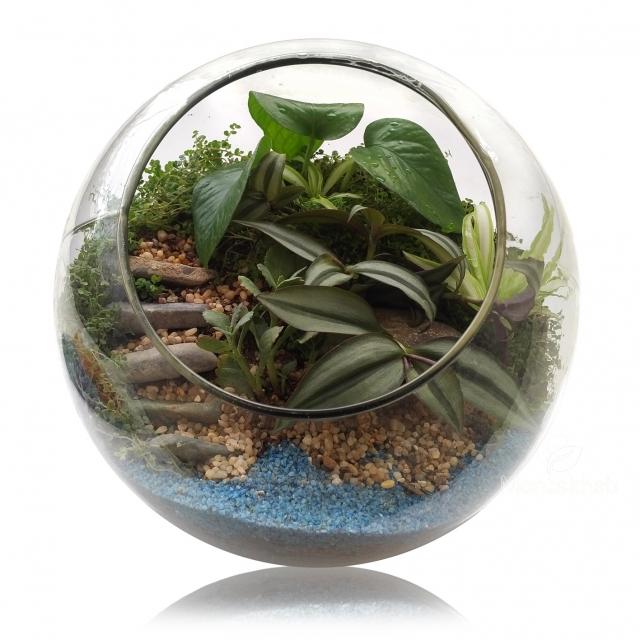 تراریوم گیاه در گلدان شیشهای مورب سایز سوپر ارتفاع 25 سانتی متر