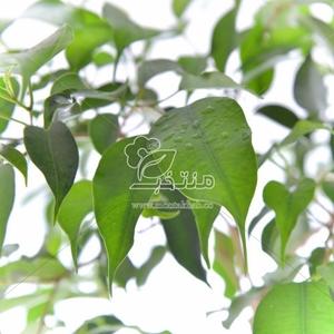 DSC_4874 copy-500×500