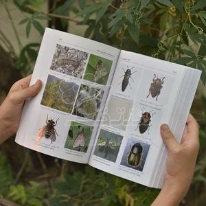 کتاب آفات درختان میوه و مدیریت کنترل آنها (شناسایی و بیواکولوژی حشرات، کنه ها و جوندگان)