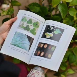 کتاب راهنمای کامل و مصور تولید توت فرنگی به روش کشت خاکی و هیدروپونیک