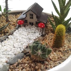 مجموعه کاکتوس در گلدان بونسای سفید ساده ارتفاع 22 سانتیمتر