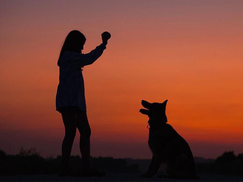 تربیت سگ و آموزش های لازم قسمت یک