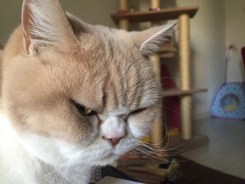 10 چیزی که گربه ها از آنها متنفرند.