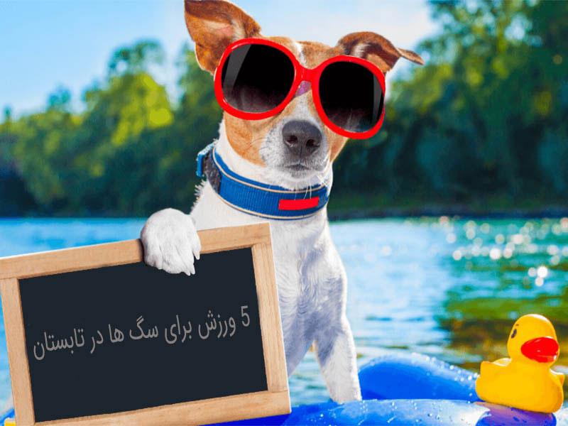 پنج ورزش برای سگ ها در تابستان