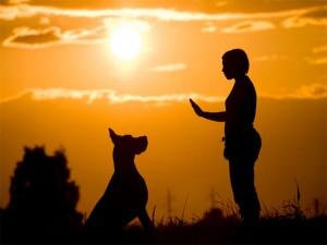 تربیت سگ و آموزش های لازم قسمت دو