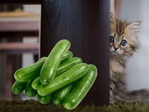 چرا گربه ها از خیار می ترسند