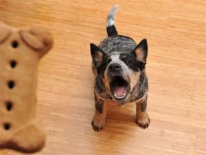 10 چیزی که سگ ها از آنها متنفرند.