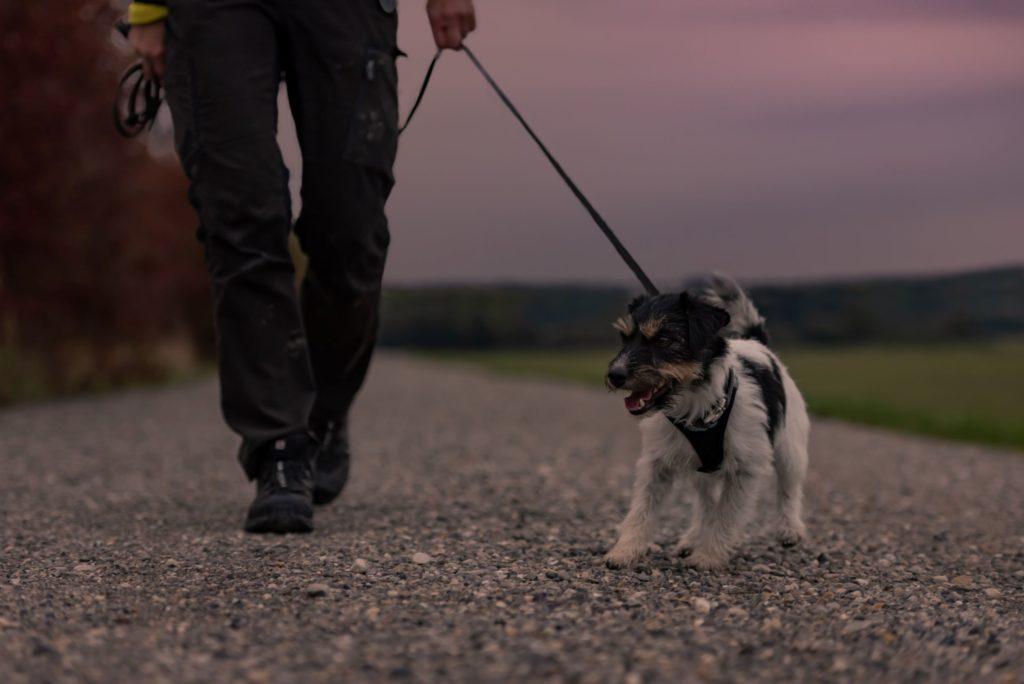 عکس گردش همراه سگ