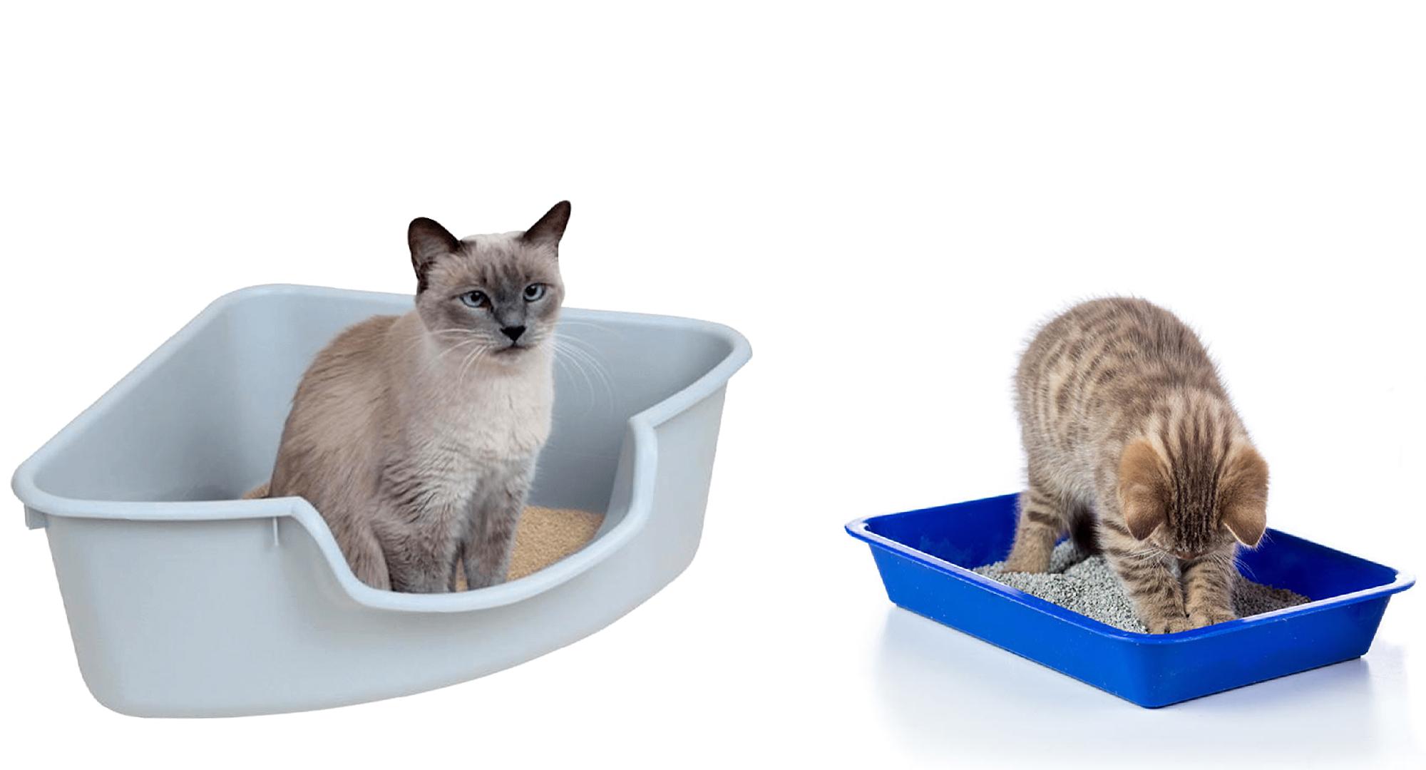 عکس ظرف خاک بستر گربه
