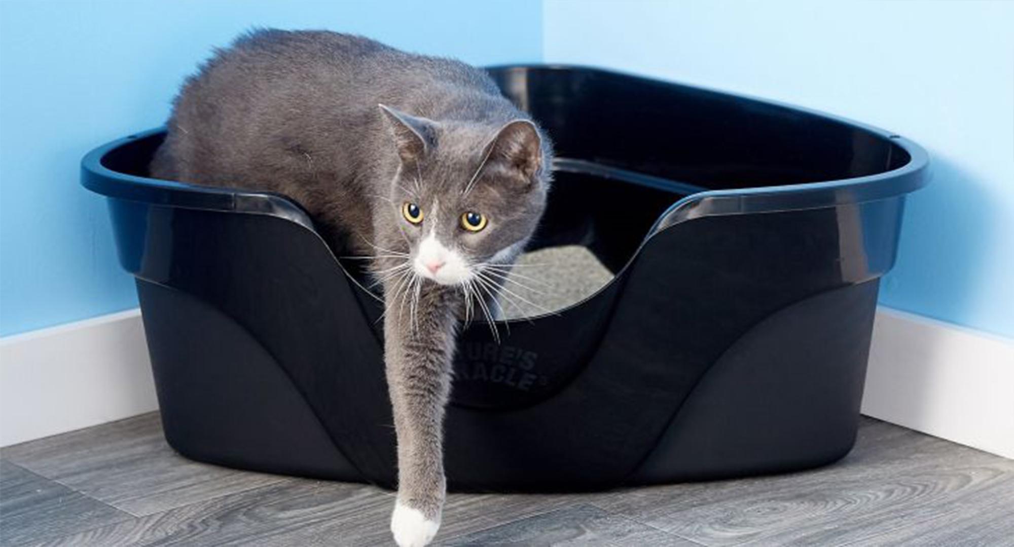 عکس ظرف مخصوص ادرار گربه