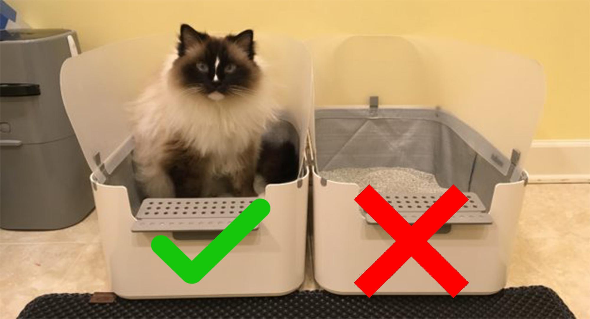 عکس انتخاب خاک مناسب یرای گربه