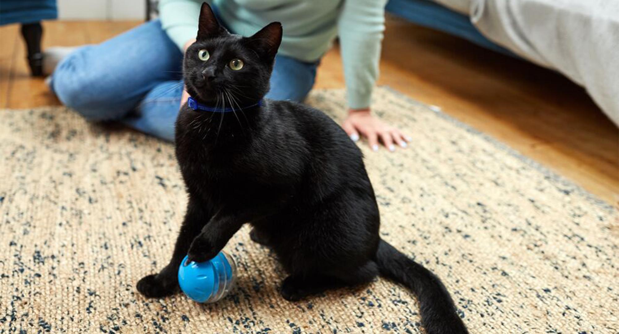 عکس تشویق گربه با بازی