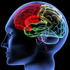 نوشیدنی هایی که مغزتان را قوی می کند!