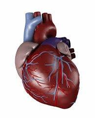 تپش قلب را مهار کنيد