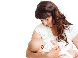 گیاهان مفید برای افزایش شیر مادر