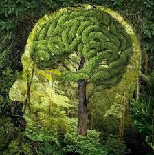 راههای تقویت مغز