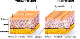 خوردنی هایی برای جوانی پوست