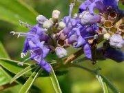 گیاهی با اثر جادویی بر زنان