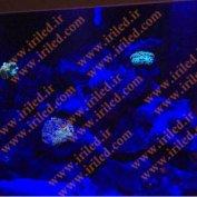 نمونه کار -  ال ای دی کلوین دار مخصوص آکواریوم آب شور