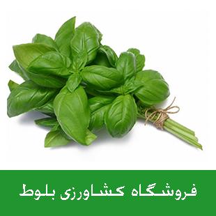 بذر ریحان سبز درجه 1 کشتزار - 500 گرمی