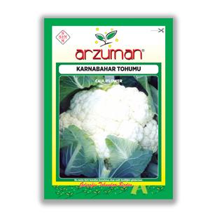 بذر گل كلم آروزمان ترکیه - Arzuman
